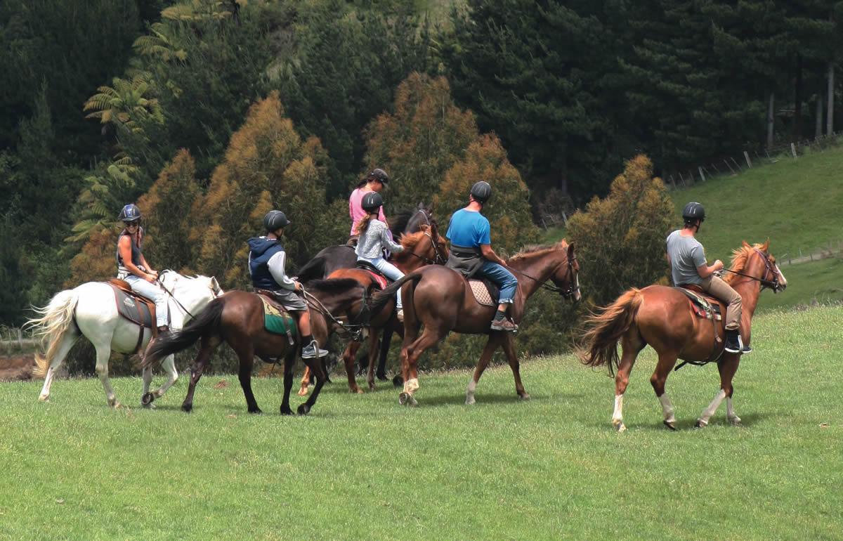 new_horses